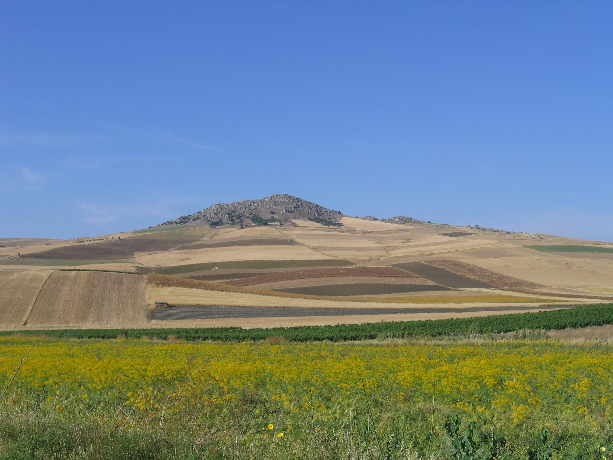 Nuovi Progetti Su Cibo E Agricoltura !